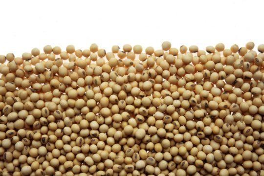 Diversos usos de la soya